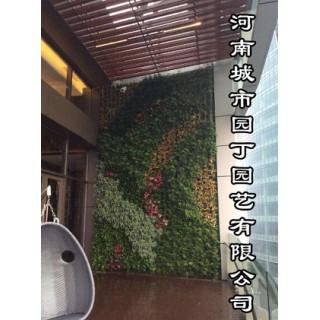 河南城市园丁园艺有限公司_郑州垂直植物墙制作价格/图片,河南城市园丁园艺有限公司