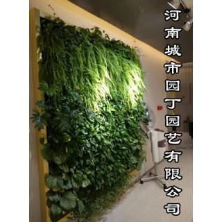 河南城市园丁园艺有限公司室内郑州垂直植物墙制作(绿植墙),河南城市园丁园艺有限公司
