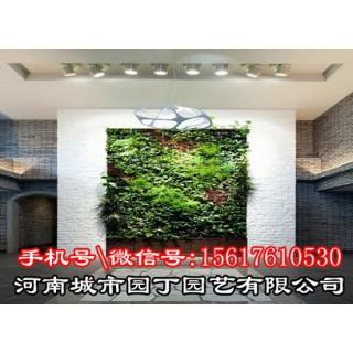 郑州垂直植物墙的基本特点,首选城市园丁,河南城市园丁园艺有限公司